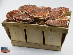 COQUILLES ST JACQUES...